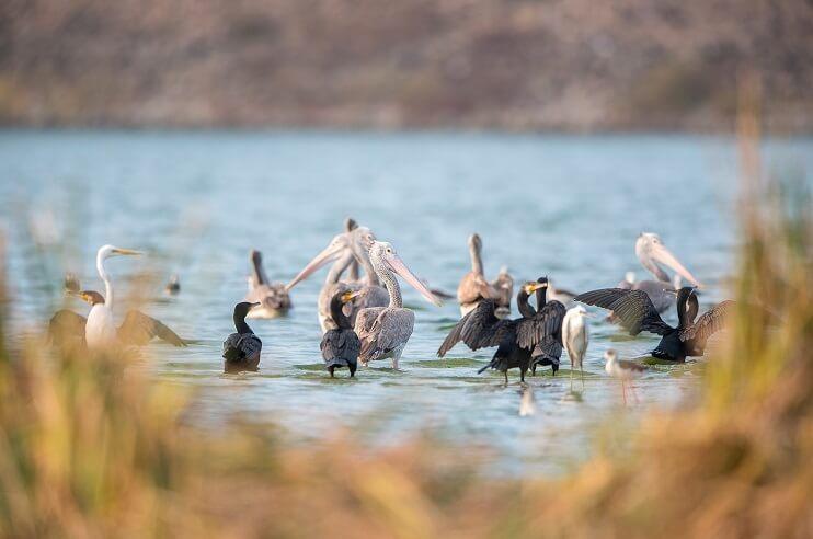 Birding in Madhya Pradesh