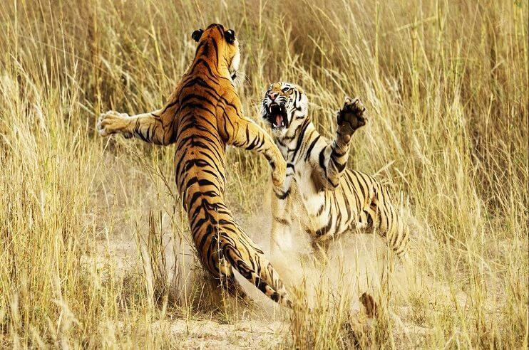 Wildlife Photography in Madhya Pradesh