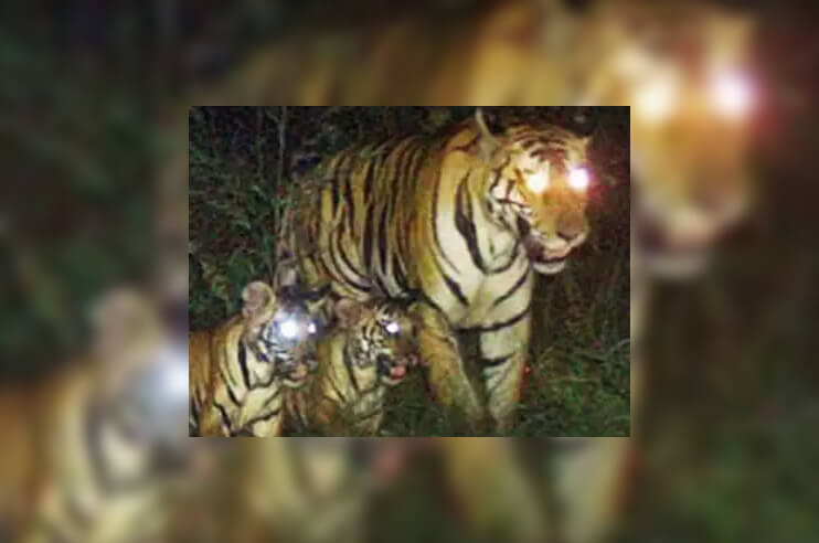 Panna National Park as Tigress Gives Birth to 2 Cubs